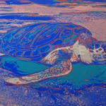 Andy Warhol – Turtle F.S. II 360A jpg