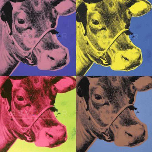 Cow-Suite-Four